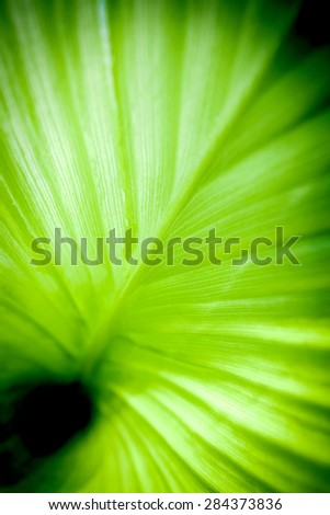 Abstract blur fresh green leaf (shallow DoF) - stock photo