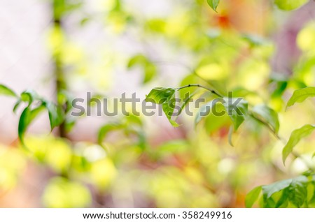 abstract blur green and yellow leaf on the autumn time - stock photo