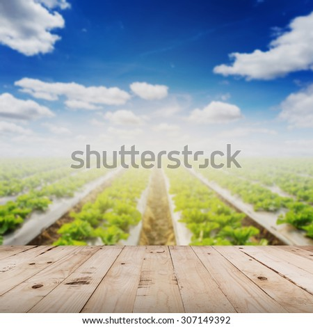 abstract blurred field lettuce  and sunlight with wood table. - stock photo