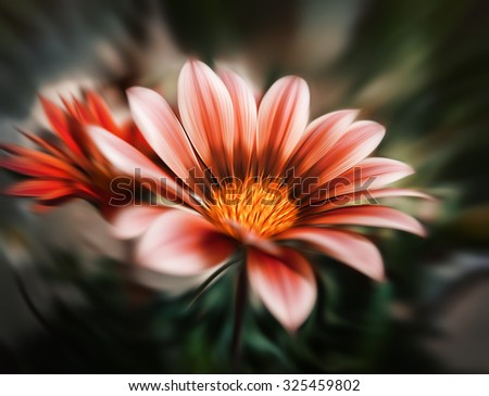 Abstract blurred gerbera flowers. Intentional motion blur. Abstract beautiful flower, colorful floral background
