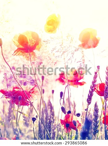 Abstract blurred nature background, summer meadow at sunrise. - stock photo
