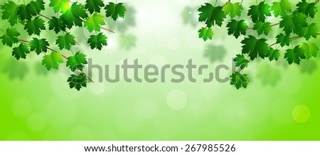 abstract bright spring banner with green leaves