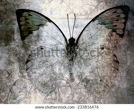 abstract Butterfly Background  - stock photo