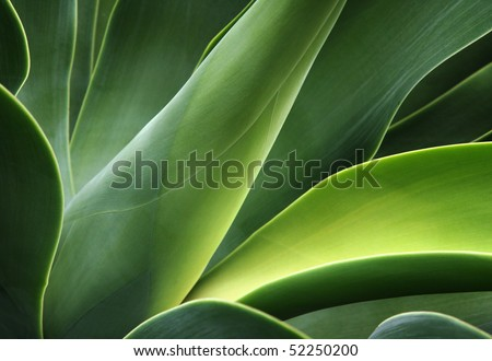 abstract cactus plant - stock photo