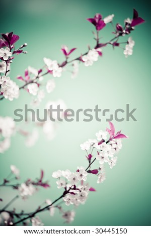 Abstract colored bright floral ornate background with flowers - stock photo