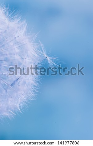 Abstract colorful dandelion seeds with shallow depth of field  - stock photo