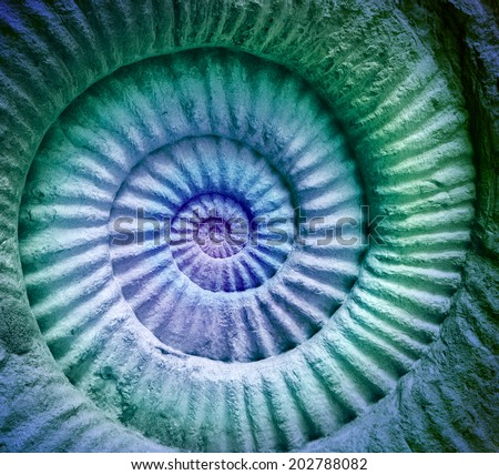 Abstract colors of ammonite prehistoric fossil background.