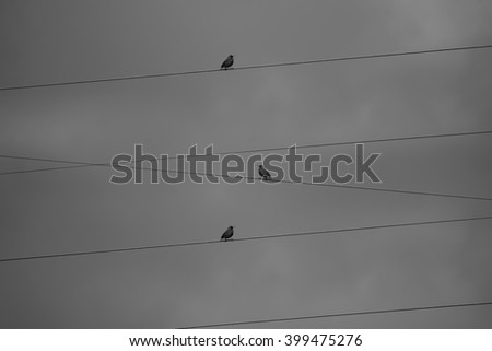 abstract crossed cables and birds black and white conceptual animal background