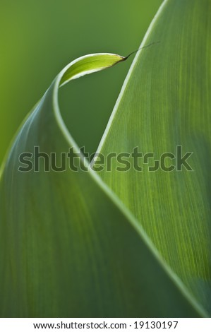 Abstract curled leaf - stock photo