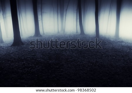 abstract dark forest with fog - stock photo