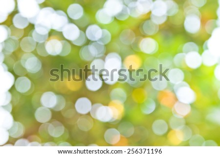 abstract environmental backgrounds with birch foliage - stock photo