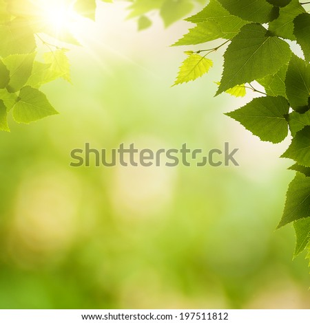 abstract environmental backgrounds birch foliage beauty stock photo