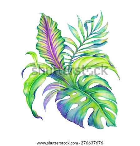 abstract exotic jungle foliage, assorted tropical leaves watercolor illustration isolated on white background - stock photo