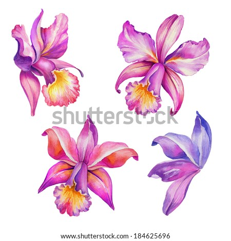 abstract exotic orchid flowers set, watercolor illustration isolated on white background - stock photo