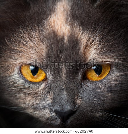 Abstract eyes of cat.