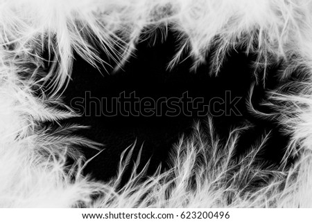 Abstract feather background, great for design