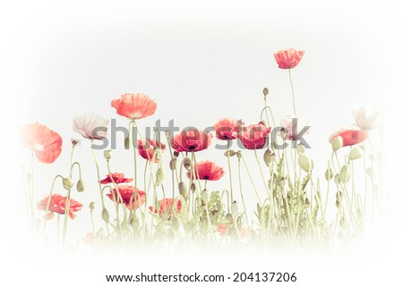 Abstract floral background in vintage style for greeting card. Wild poppy flowers on summer meadow. Watercolor painting effect - stock photo