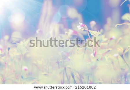 Abstract floral background, soft focus - stock photo