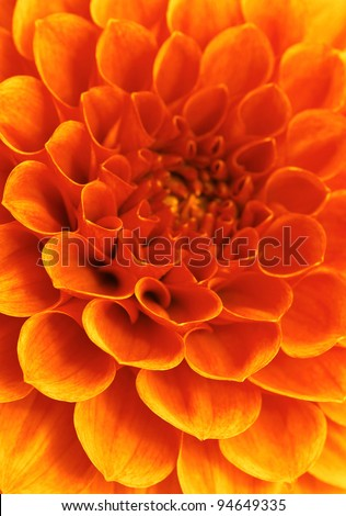 Abstract flower and beautiful petals - stock photo