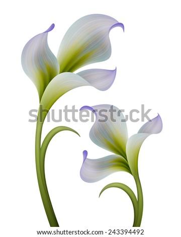abstract flowers illustration isolated on white background, design elements set - stock photo