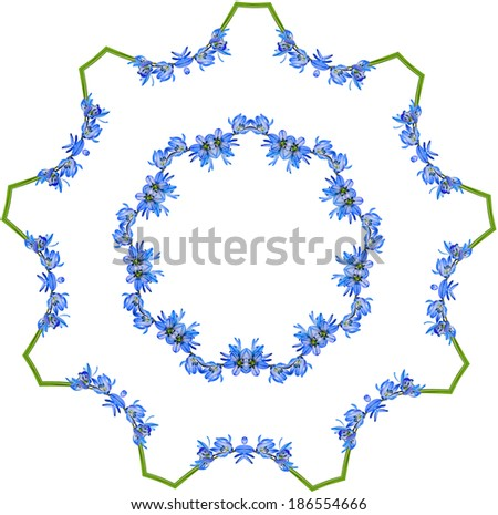 Abstract Frame Pattern of scilla plant isolated on white background, with copy space for text - stock photo