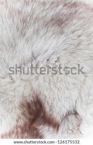 abstract fur texture background - stock photo
