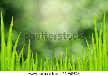 Abstract green grass leaves with bokeh nature background. - stock photo