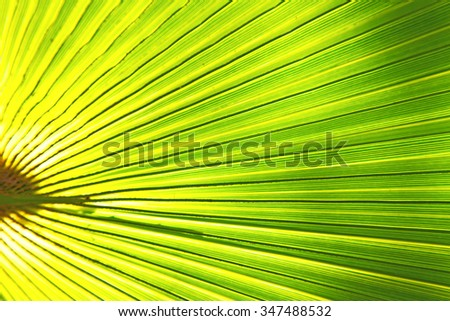 abstract green leaf in the light and shadow morocco africa