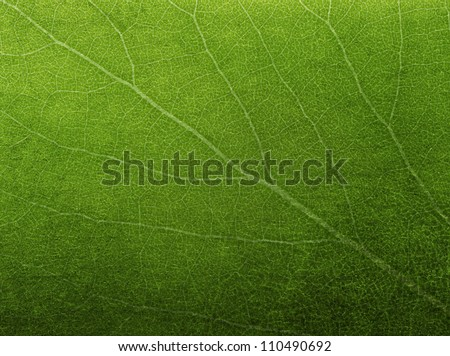 Abstract green leaf texture for background - stock photo