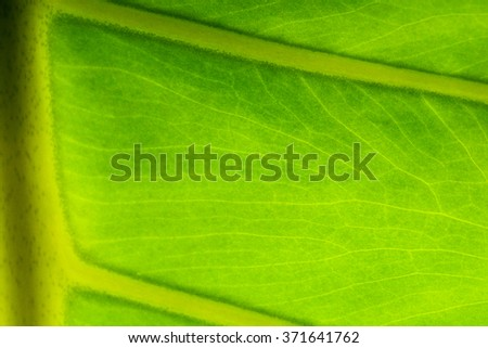Abstract green leaf texture for background.