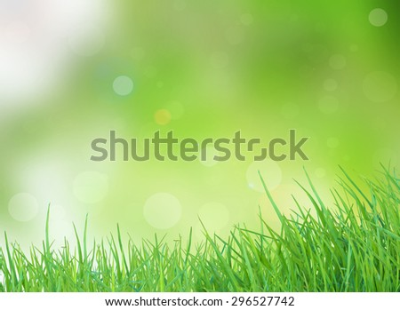 abstract green spring nature background with grass and bokeh
