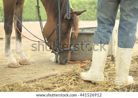 Abstract herdsman feeding carrot to brown horse