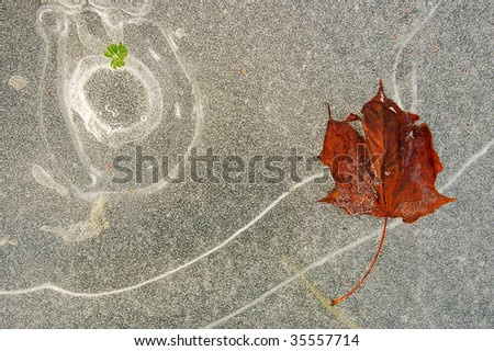 abstract ice background with red maple leaf and little green leaf - stock photo