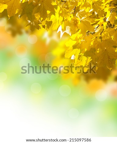 abstract image of autumn yellow leaves on the white background - stock photo