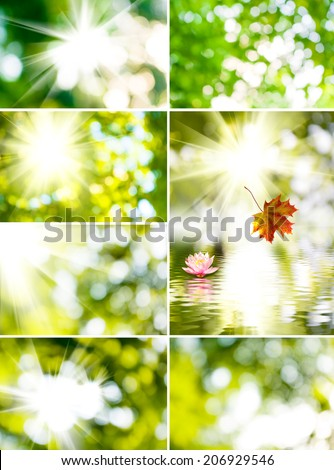 abstract image of the sun and the beautiful flower on a green background