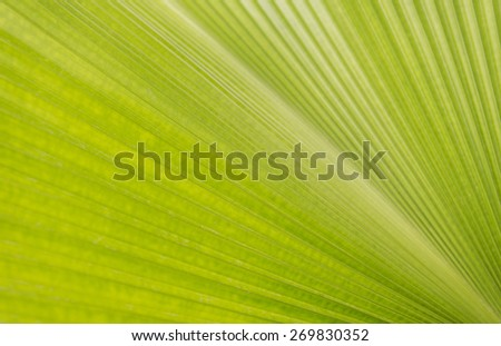 Abstract lines green leaf texture for background - stock photo