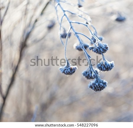 Abstract macro of white hoarfrost on plants in winter. Abstraction natural background.