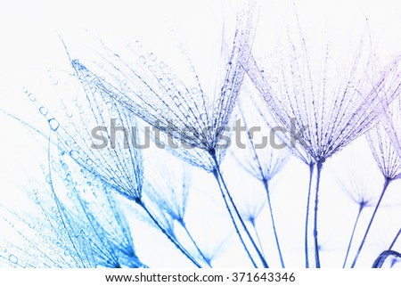 Abstract macro photo of plant's seeds with water drops. - stock photo