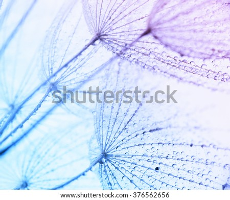 Abstract macro photo of plant's seeds with water drops. Abstract background.
