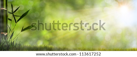 Abstract misty natural backgrounds with bamboo foliage - stock photo
