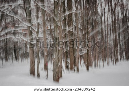 Abstract motion blur of winter pine forest tree trunks during snowstorm created by camera movement - stock photo