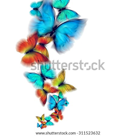 abstract multicolored butterflies on a white background - stock photo
