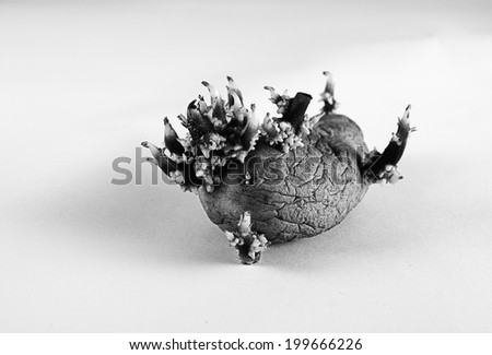 Abstract Mutated Potato Lab (BW)  - stock photo
