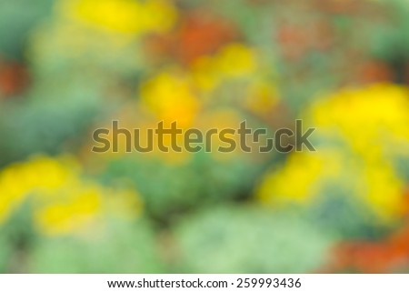 Abstract natural background - blurred flower-bed - stock photo