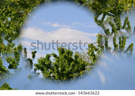 Abstract natural background, tree leaves