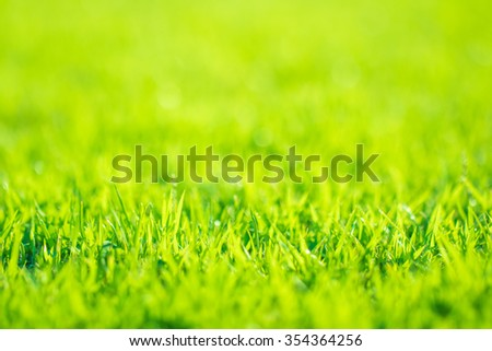 Abstract natural backgrounds grass - stock photo