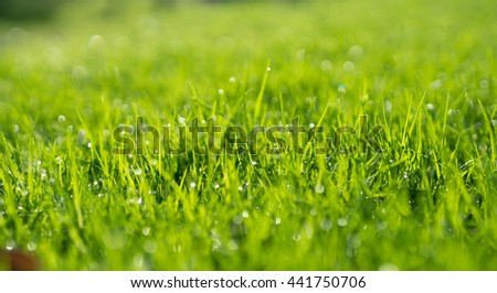 Abstract natural backgrounds of green grass and beauty blurred bokeh. Selective focus and close up in shot for blurred effect. - stock photo