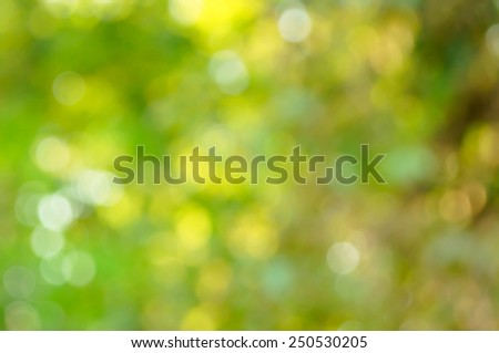 abstract nature background selective focus tree stock photo royalty