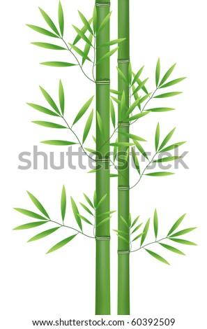 Abstract nature bamboo - stock photo