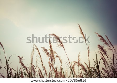 abstract nature grass field and sky background